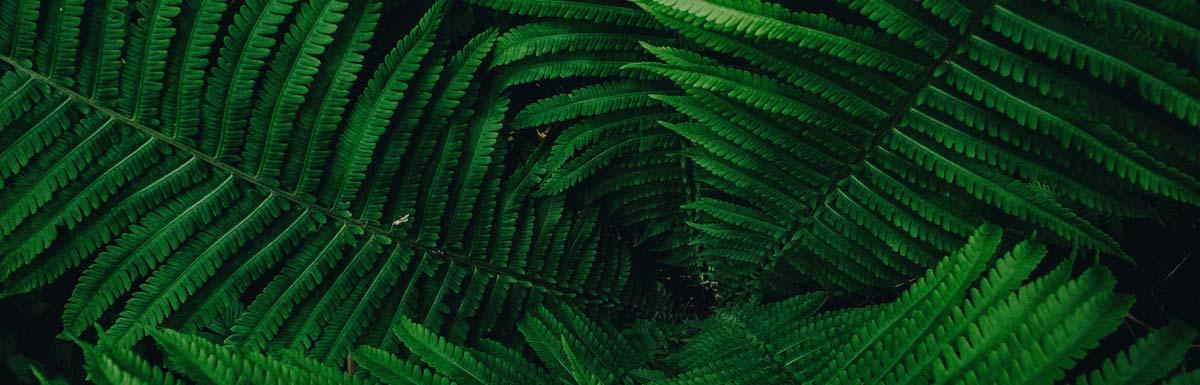 naturopathe-toulouse-tarif-avis-soin-naturopathie-31-14